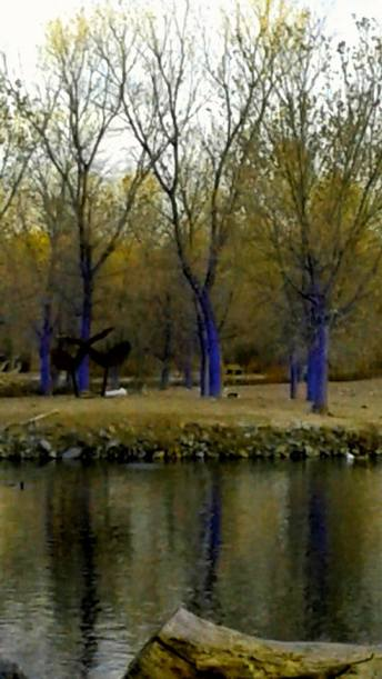 blue-trees